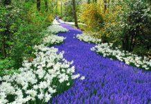 LA Arboretum & Botanical Garden